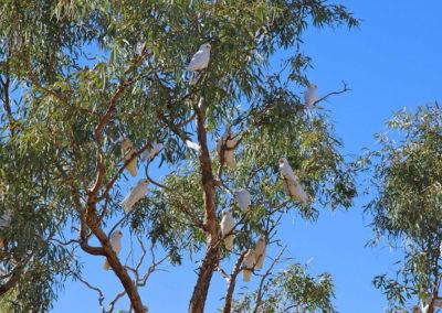 dig-tree-image14