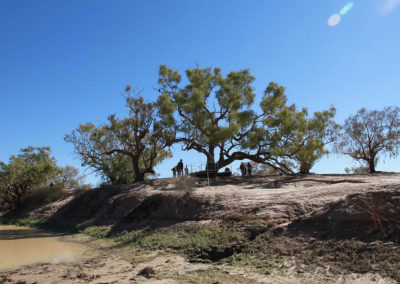 dig-tree-image16