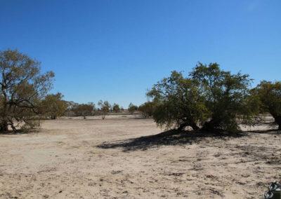 dig-tree-image17