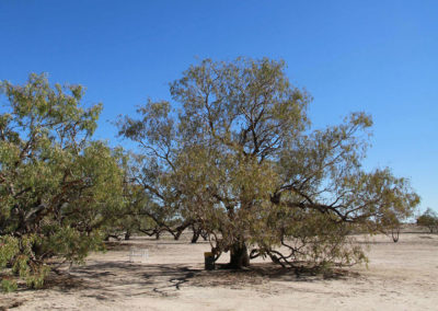 dig-tree-image18