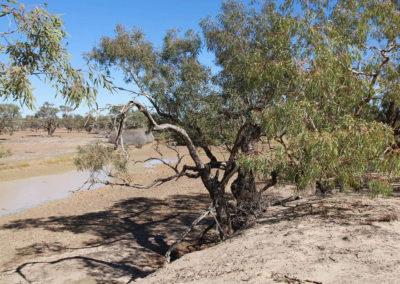 dig-tree-image19