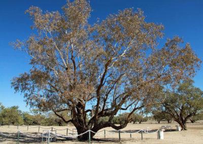dig-tree-image20