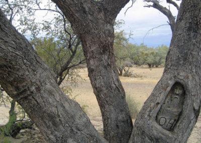 dig-tree-image9